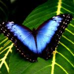 Monteverde Regnskog Costa Rica