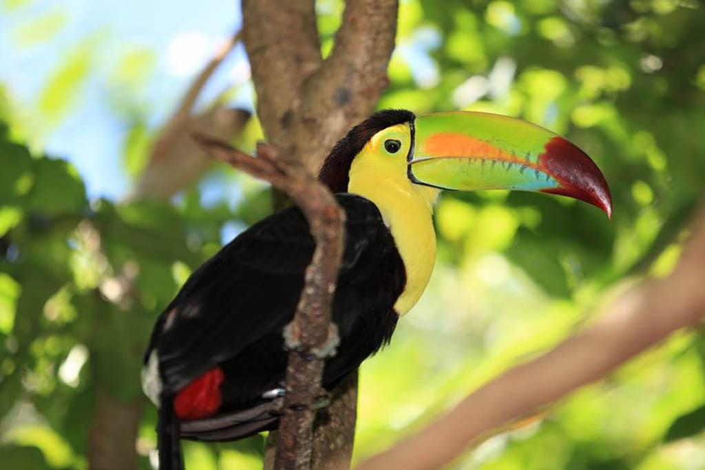Underbara Bungalows Santa Teresa, Costa Rica