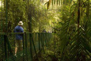 Monteverde molnregnskog