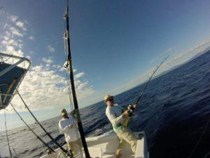 fiska Marlin