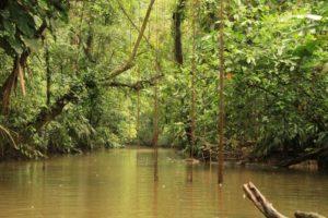 Flodbåts tur med djur i Tortugueros floddelta