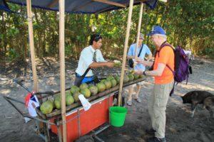 Kokosnötsdrinkar på en strand i Karibien, Tortuguero