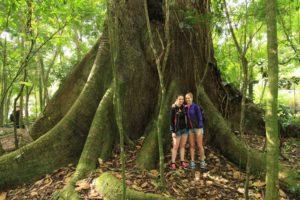 Stora träd
