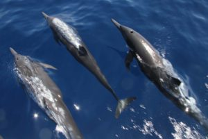 Delfiner Costa Rica